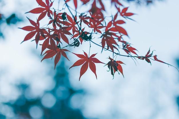 Blätter herbst.
