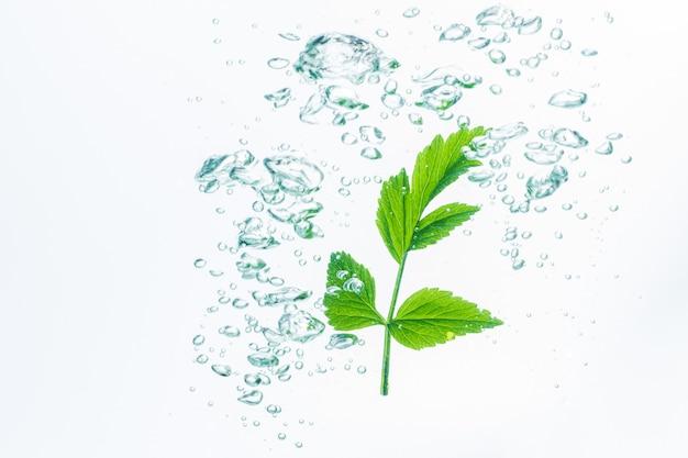 Blätter im wasser mit blasen