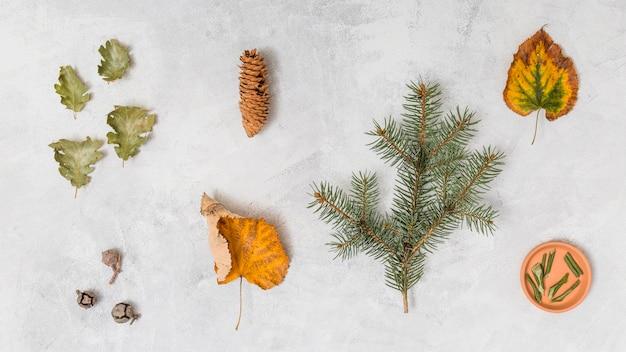 Blätter, kräuter und kiefern