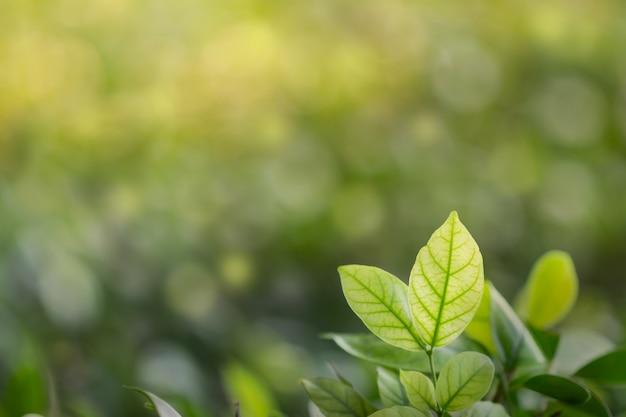 Blätter mit selektivem fokus