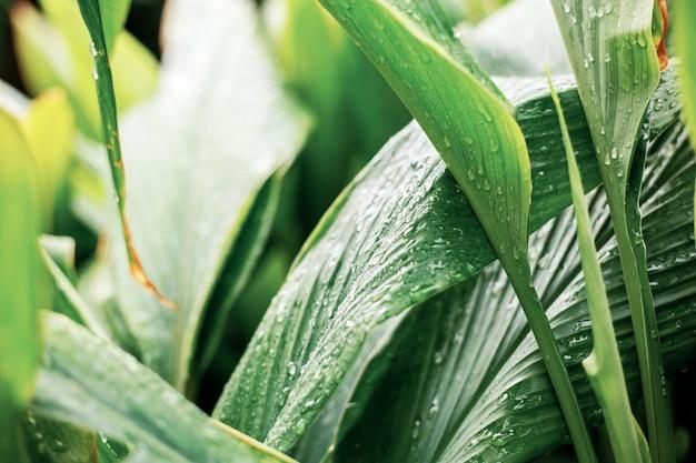 Blätter mit wassertropfen.