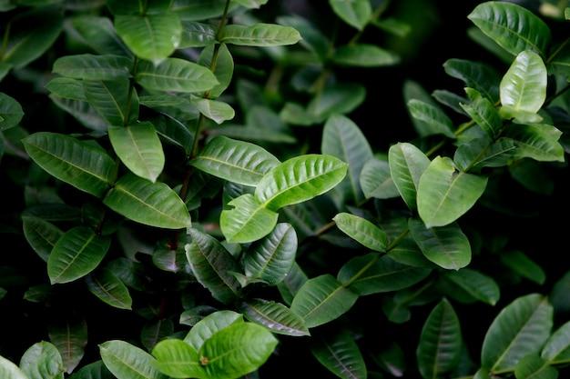 Blätter, nahaufnahme