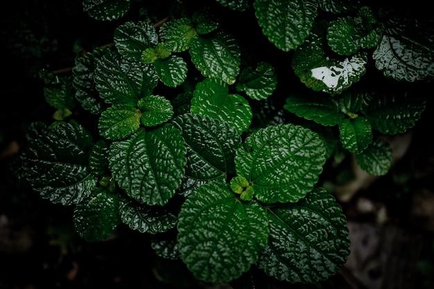 Blätter natürlichen hintergrund, textur des blattes, blätter
