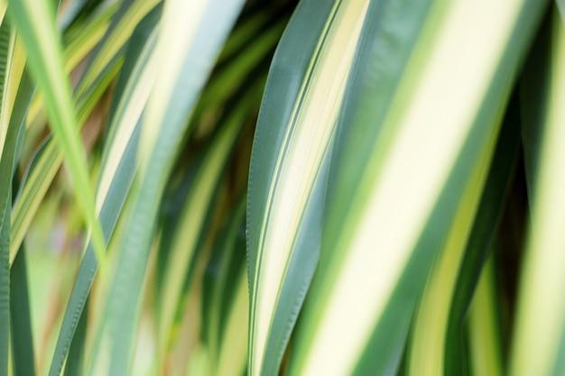 Blätter pflanzen mit hintergrund.
