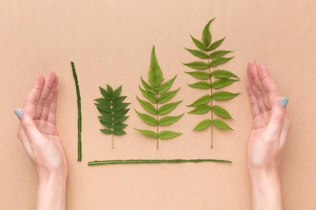 Blätter sammlung