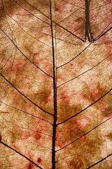Blätter schließen hintergrund. trocknen sie in alten blättern mit einem mikromuster auf einem hellen dekorativen hintergrund