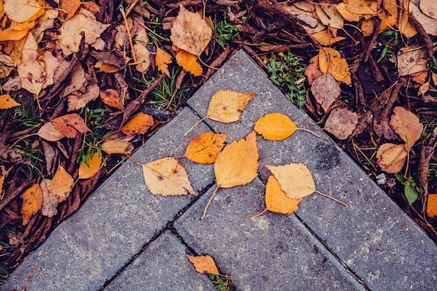 Blätter über alten stein