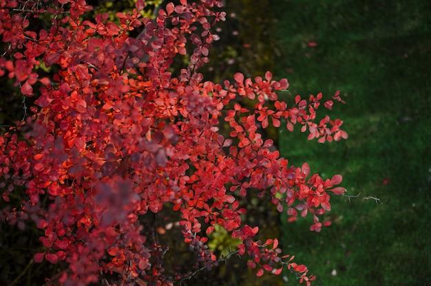 Blätter und dornen