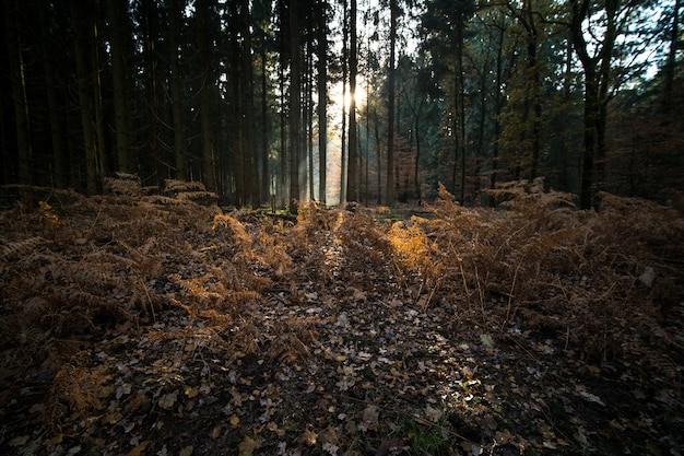 Blätter und zweige bedecken den boden eines waldes, der im herbst von bäumen umgeben ist