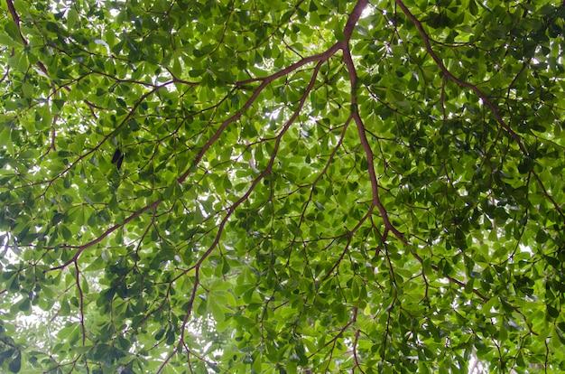 Blätter und zweige hintergrund