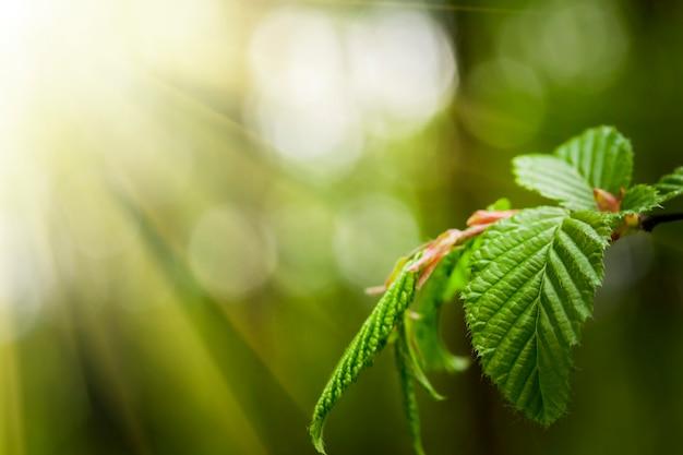Blättern sie an einem baum im wald. natur grün holz sonnenlicht oberflächen. frühling sommer
