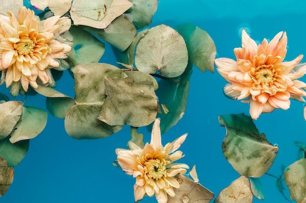 Blasse chrysanthemen im blauen wasser