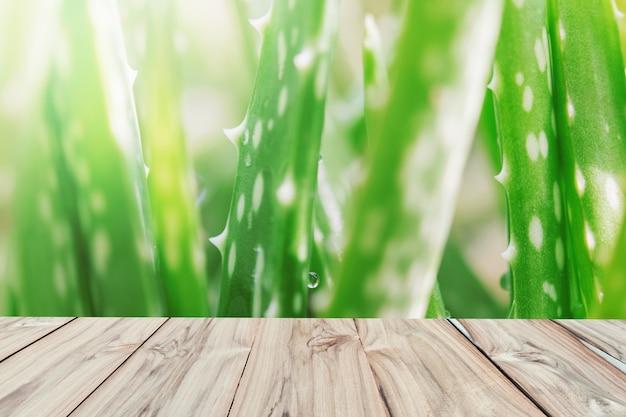 Blatt aloe vera-weichzeichnungshintergrund mit holz