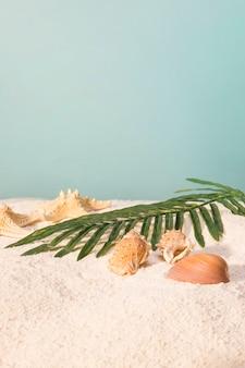 Blatt der palme mit muscheln