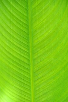 Blatt einer pflanze hautnah