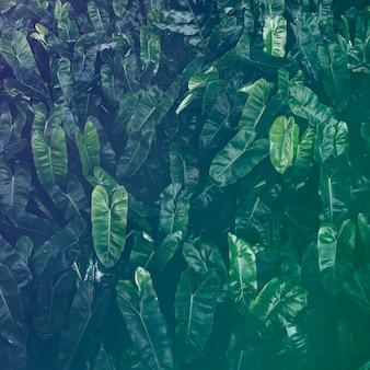 Blatt-grün-laub-laub-natur-frische