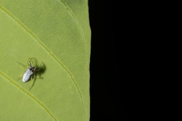 Blatt tier sprung spinne kleine nahaufnahme