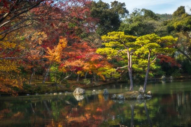 Blatt und baum in der herbstzeit in japan
