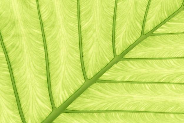Blattbeschaffenheit grüne naturbeschaffenheit Premium Fotos