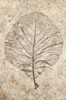 Blattdruck auf zementboden
