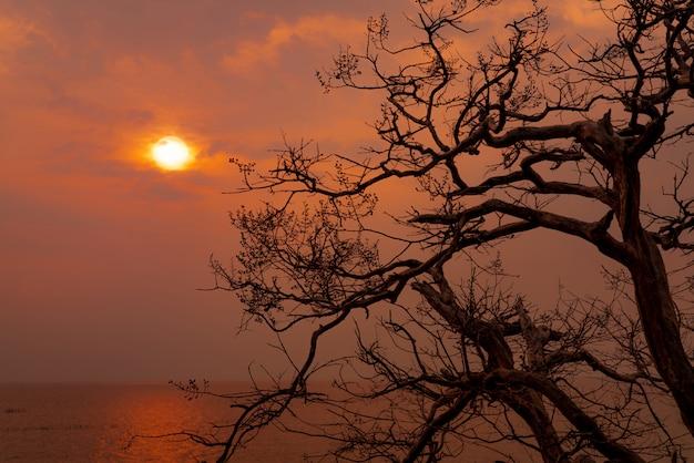 Blattloser baum der schönen schattenbild- und sonnenuntergangshimmel neben dem meer. romantische und friedliche szene von meer, sonne und himmel zur sonnenuntergangszeit mit schönheitsmuster von zweigen. herbstsaison mit ruhiger natur.