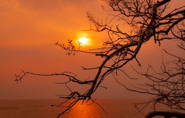 Blattloser baum der schönen schattenbild- und sonnenuntergangshimmel neben dem meer. romantische und friedliche szene von meer, sonne und himmel zur sonnenuntergangszeit mit schönheitsmuster von zweigen. schönheit in der natur. abend.
