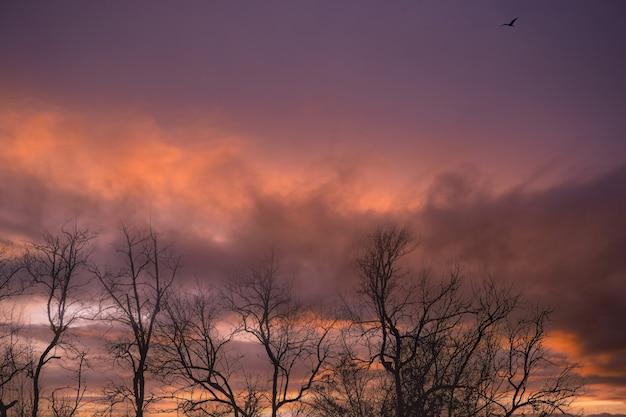 Blattloser baum der silhouette und sonnenuntergangshimmel toter baum auf dunklem sonnenuntergang