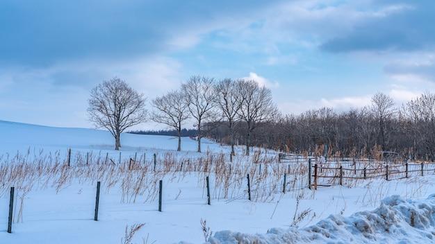 Blattloser baum mit schneelandschaft
