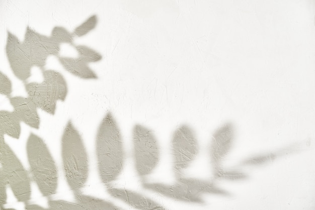 Blattschatten auf weißem hintergrund. kreativer abstrakter hintergrund. naturschattenmuster