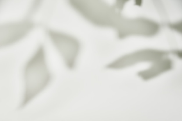 Blattschatten auf weißer wand.