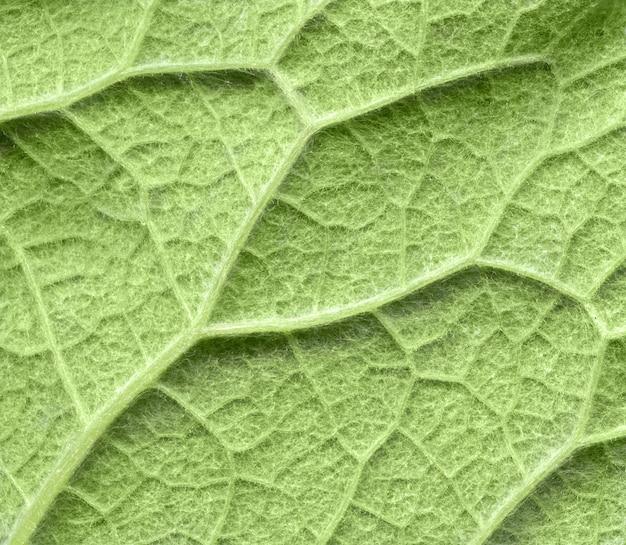 Blattstrukturmuster, textur der grünen blätter