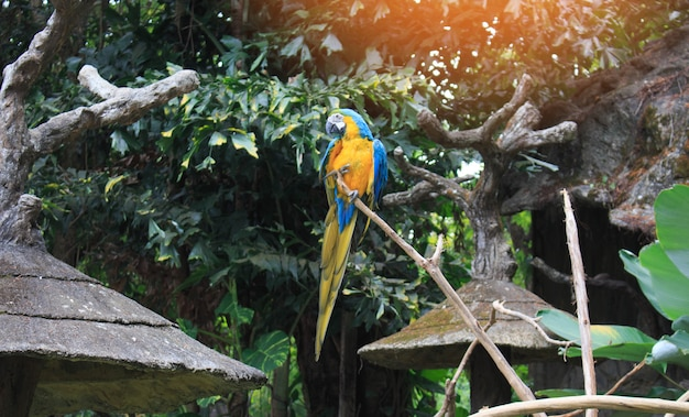 Blau-gelbes macawpapageienportrait.