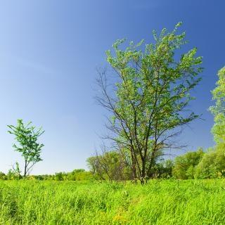 Blau und grün szene
