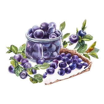 Blaubeere. botanische aquarellillustration. hand gezeichnete aquarellmalerei blaubeere Premium Fotos