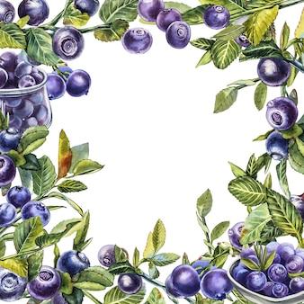 Blaubeere. botanische aquarellillustration. hand gezeichnete aquarellmalerei blaubeere