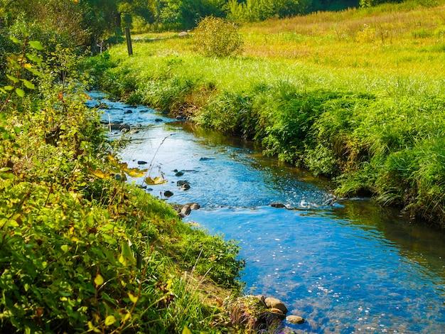 Blaue bäche auf grünem gras. blühende natur