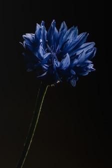 Blaue blume in der makrolinse