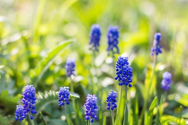 Blaue blumen und gras des frischen morgens sonnigen sommers auf unscharfem hintergrund