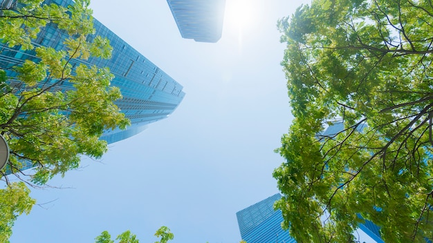 Blaue glaswand des perspektivenaußenmusters moderne gebäude mit grünem baum verlässt.