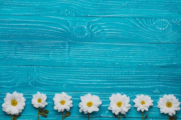 Blaue hölzerne hintergrund mit gänseblümchen in der reihe