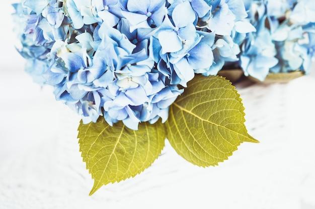 Blaue hortensie blüht im weißen korb. blumendeko für zu hause