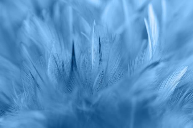 Blaue hühnerfedern in der weichen und unschärfeart für hintergrund