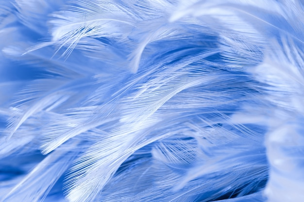 Blaue hühnerfedern in weich und unschärfe stil für den hintergrund