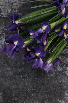 Blaue iris auf dunklem hintergrund, platz für text.