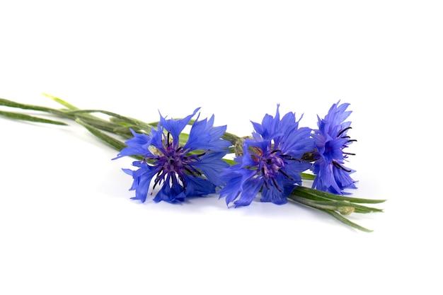 Blaue kornblume (centaurea cyanus) auf weißem hintergrund. poster.
