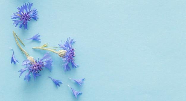 Blaue kornblumen auf blauer papieroberfläche