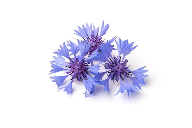 Blaue kornblumen lokalisiert auf einem weißen hintergrund