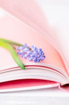 Blaue muscari oder traubenhyazinthe der frühlingsblume auf den rosa seiten des buches