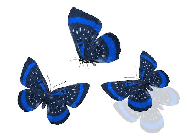 Blaue schmetterlinge isoliert auf weißem hintergrund. foto in hoher qualität