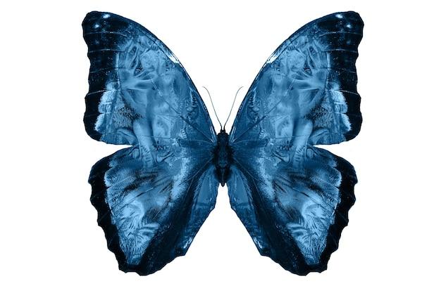 Blaue schmetterlinge isoliert auf weißem hintergrund. tropische motten. insekten für das design. aquarellfarben